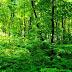 Estamos caminhando para o desaparecimento irreversível das florestas. Entrevista especial com Luiz Marques