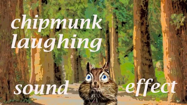 Fin Fan Fun Animal Sounds: Chipmunk Laughing - Sound Effect
