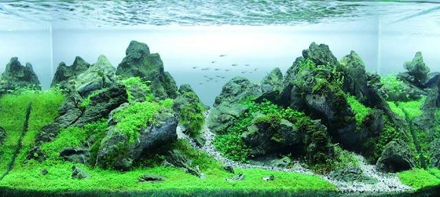 foto seni aquascape yang cantik dan menarik dan juga menakjubkan