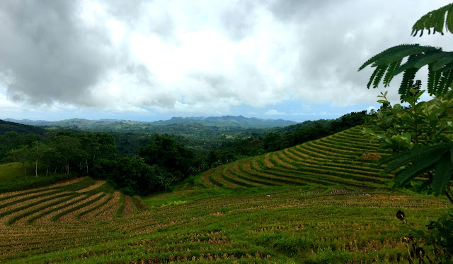Cadapdapan Rice Terraces - Candijay Bohol