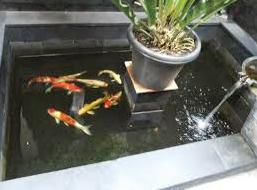 cara membuat kolam koi