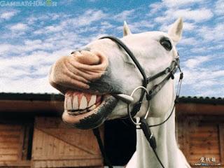 kuda | Hewan yang Dipercaya Bisa Melihat Hantu