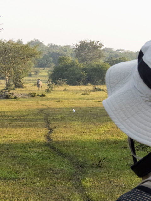 Walking safari in Lake Mburo National Park in Uganda