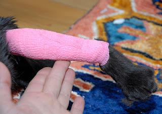 Penyebab dan Cara Mengobati Luka Pada Kucing - OROPPA