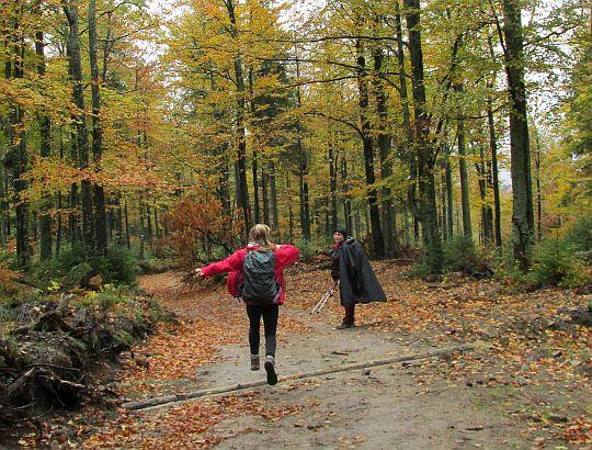 Na odejściu do Bacówki nad Wierchomlą.