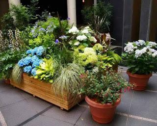 Tukang taman jabodetabek | desain taman rumah | taman indoor | tropical garden