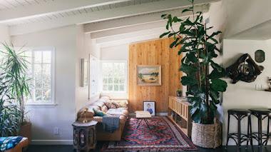 Decorar con plantas de interior muy grandes