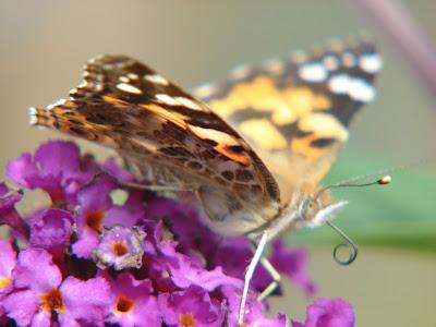 Wiersze Lekkim Piórem Pisane Jak Motyle