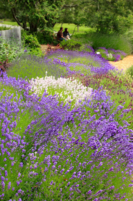 Pelindaba Lavender Farm - Lavender for Valentine's Day