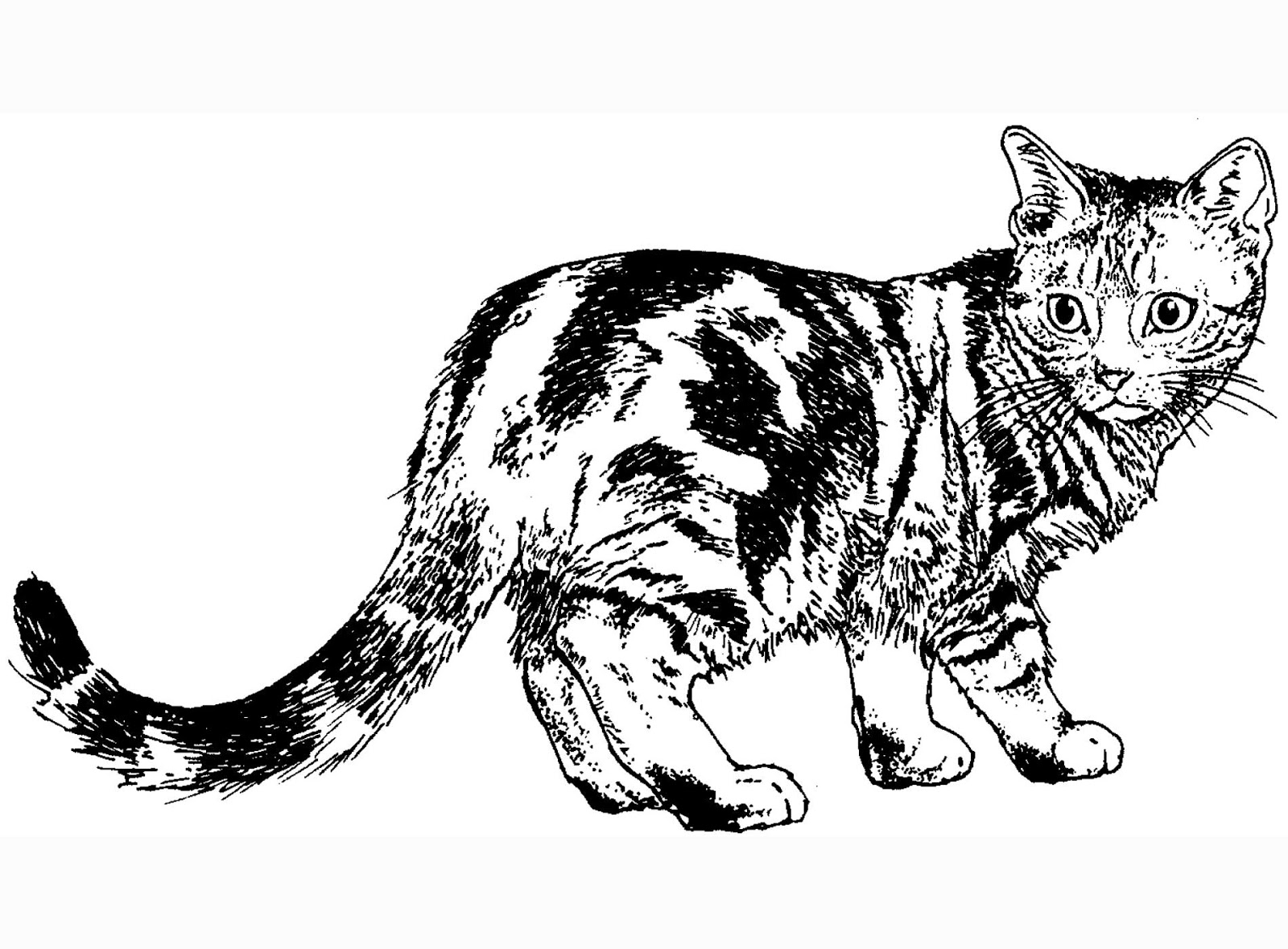 Cat Muscle Coloring Pages Coloring Page