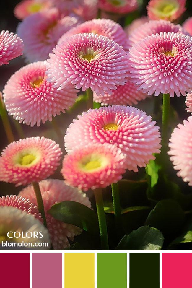 paletas_de_colores_23_inspiracion_primavera_7