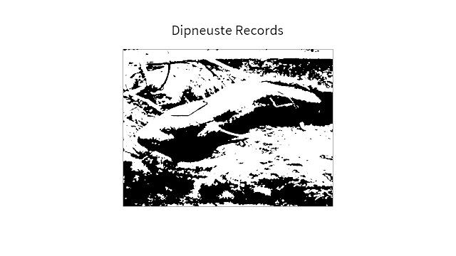 Anthurus d'Archer - Dipneuste records
