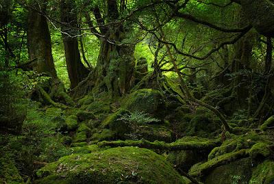 Jenis Tumbuhan Hutan Hujan Tropis