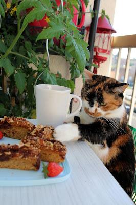 chat gateaux moelleux plantes fraises noisettes amandes