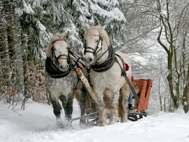 Download Sleigh Horses HD wallpaper. Click Visit page Button for More Images.