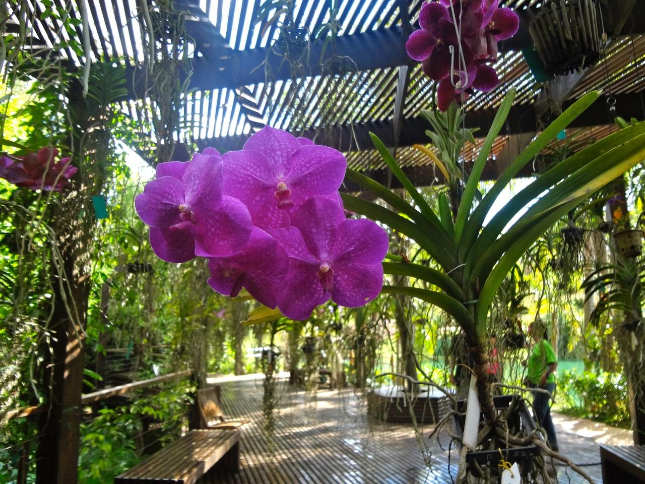 Fundação do Instituto Cultural de Inhotim - Brumadinho (MG) - orquídea