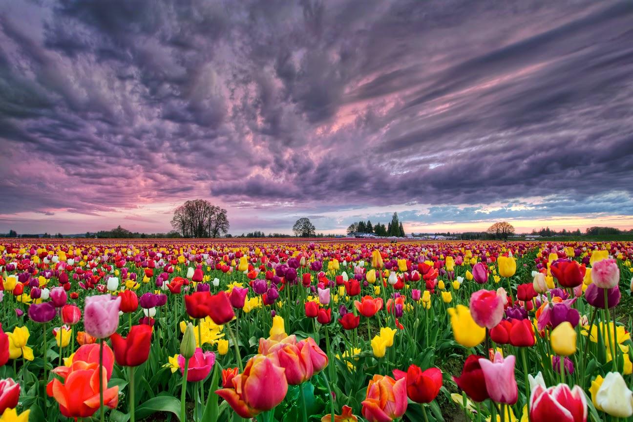 18 Taman Bunga Terindah Di Dunia