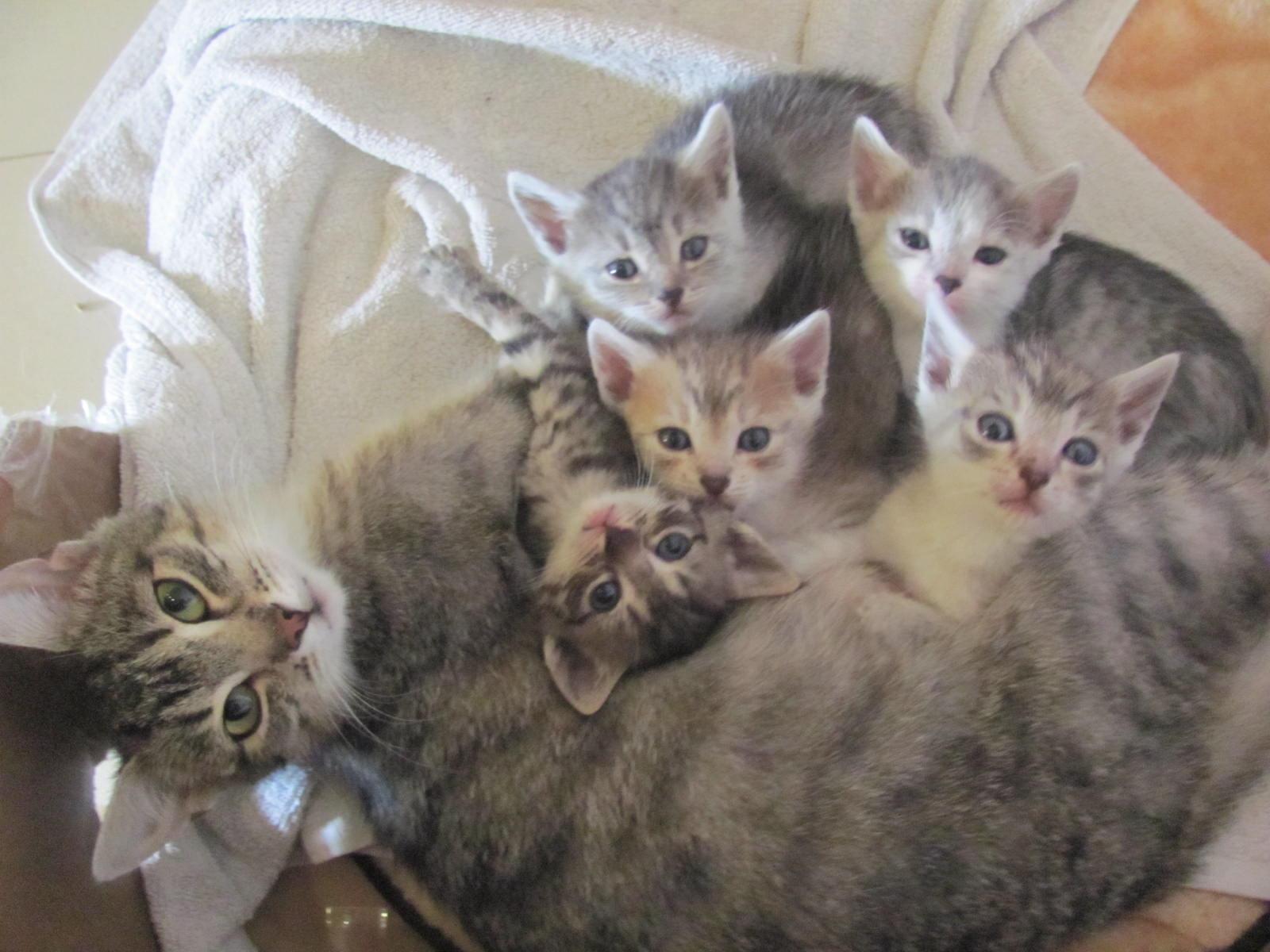 Funny Cats: Funny Cats - Part 60 (30 Pics + 10 Gifs)