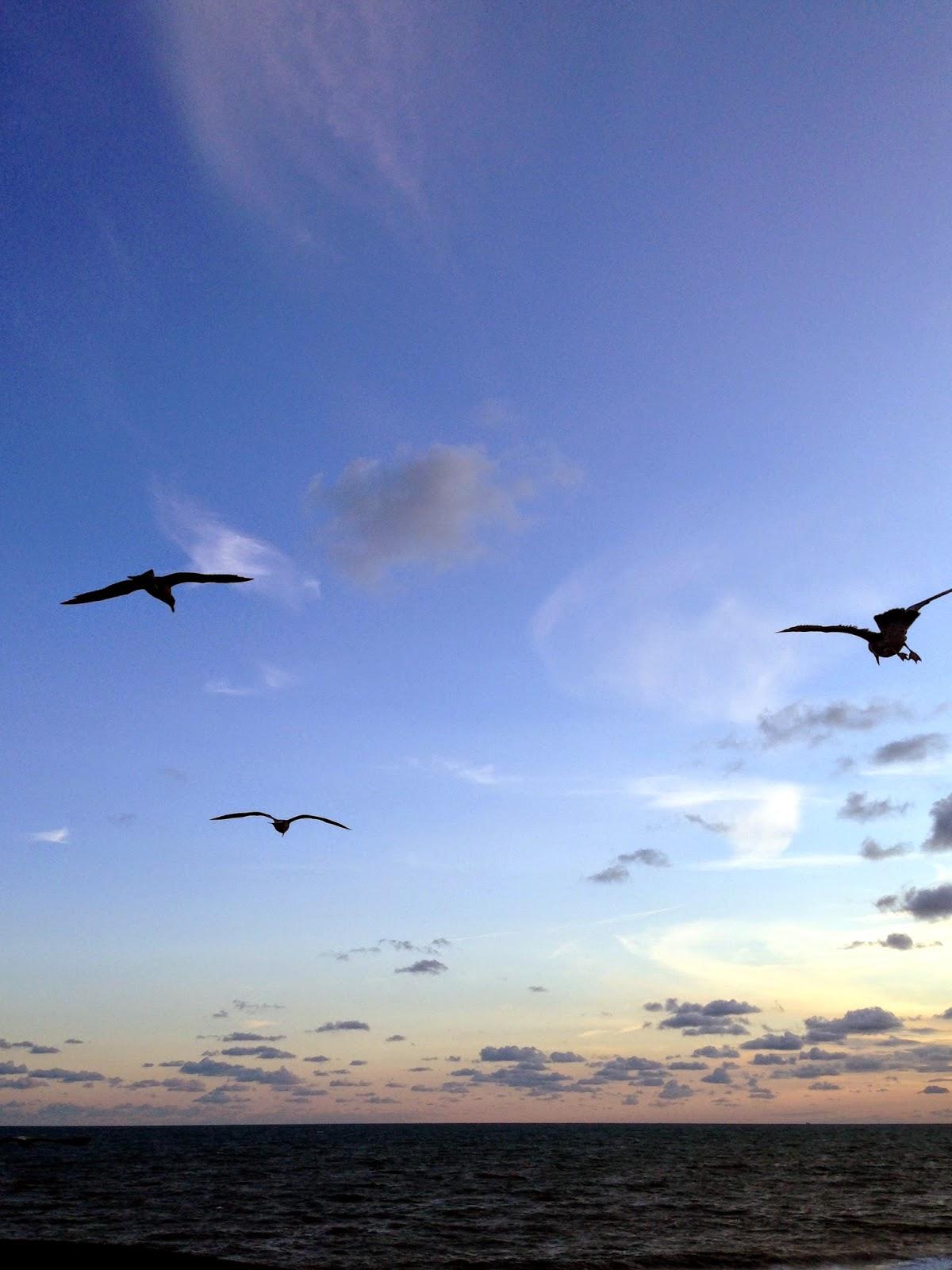 Brighton Seagulls