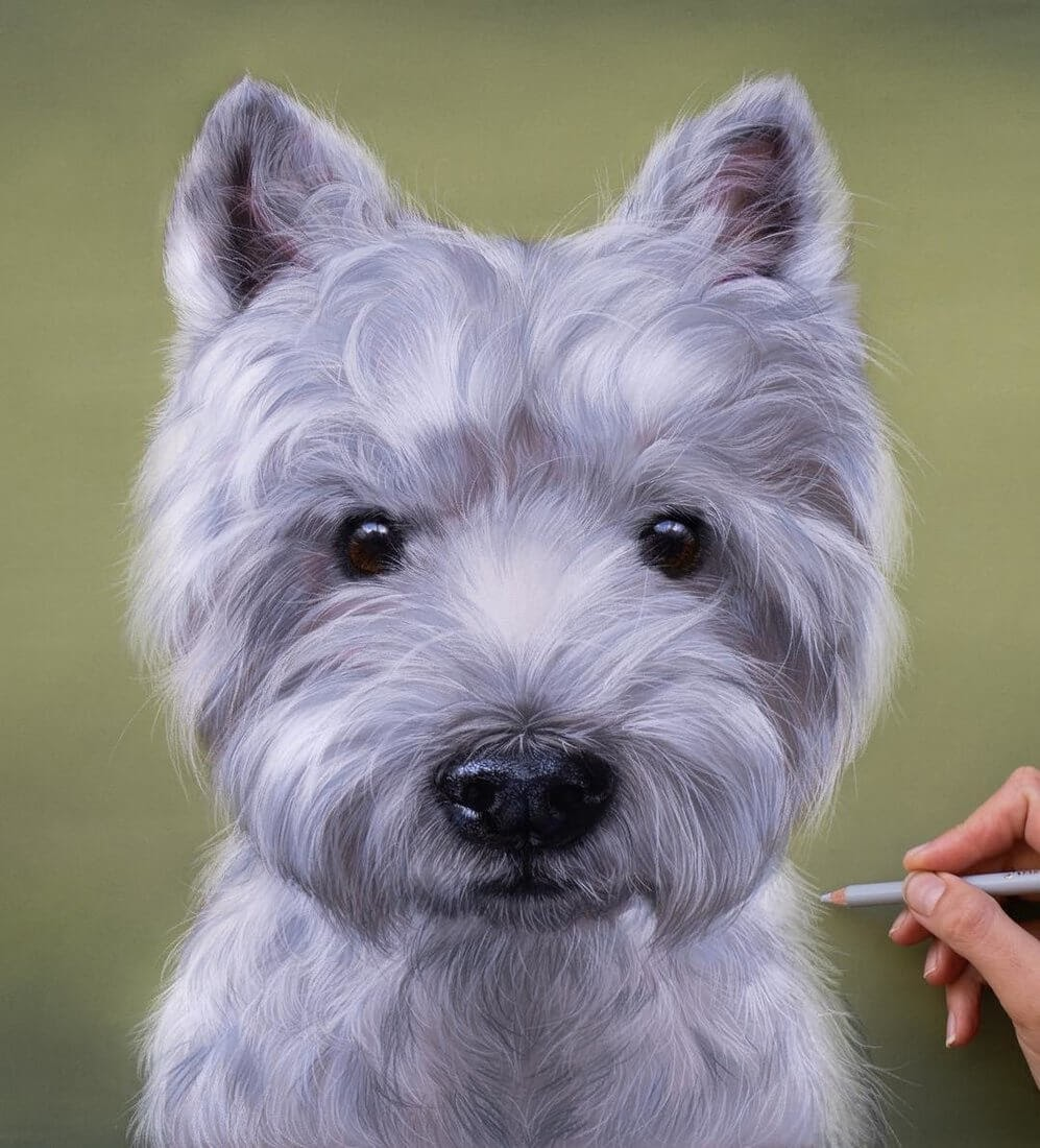 11-Luka-the-Westie-Patricia-Otero-Cats-and-Dogs-Portrait-Artist-www-designstack-co