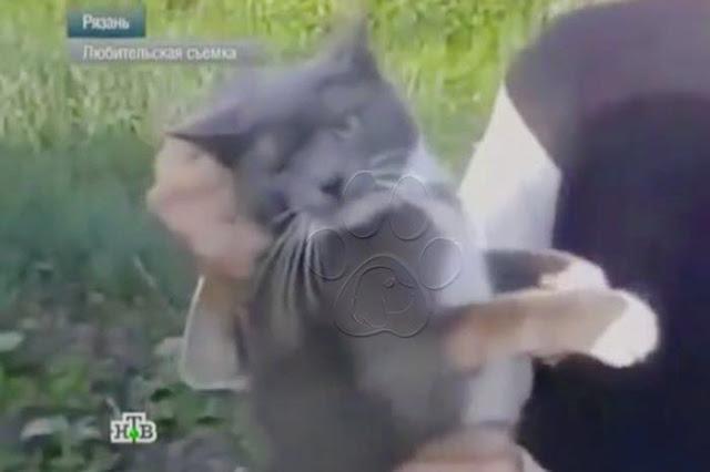 [ABERRANTE] Psicópatas son grabados atando un gato a un petardo para luego hacerlo explotar (video)