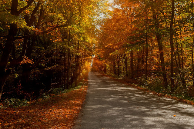 A lovely little country road near Orillia (Oro-Medonte township) dressed in sunshine and autumn colours.