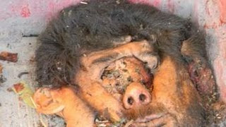 people eaten alive