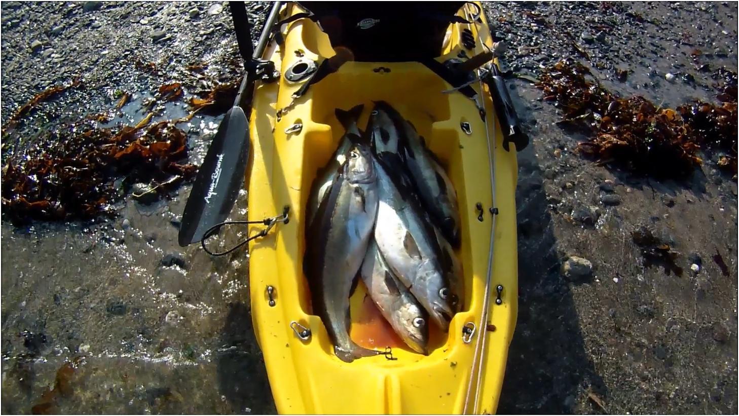 Cornish Shore And Kayak Fisherman 2015