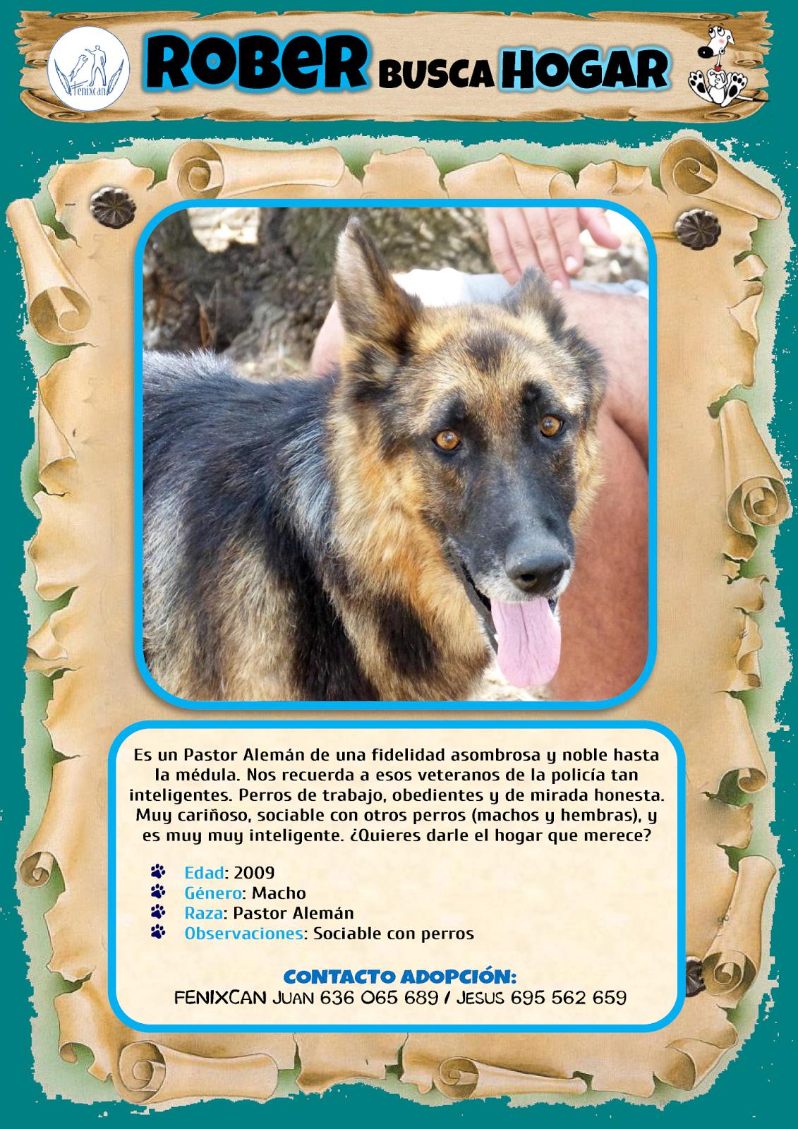 ANIMAL PET SPAIN: PERRO EN ADOPCIÓN: Rober