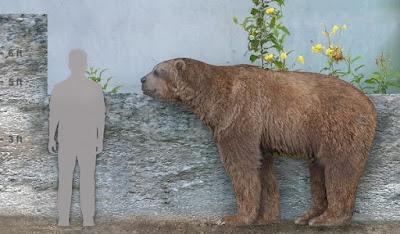 Comparación tamaño oso de cara corta - Arctodus simus