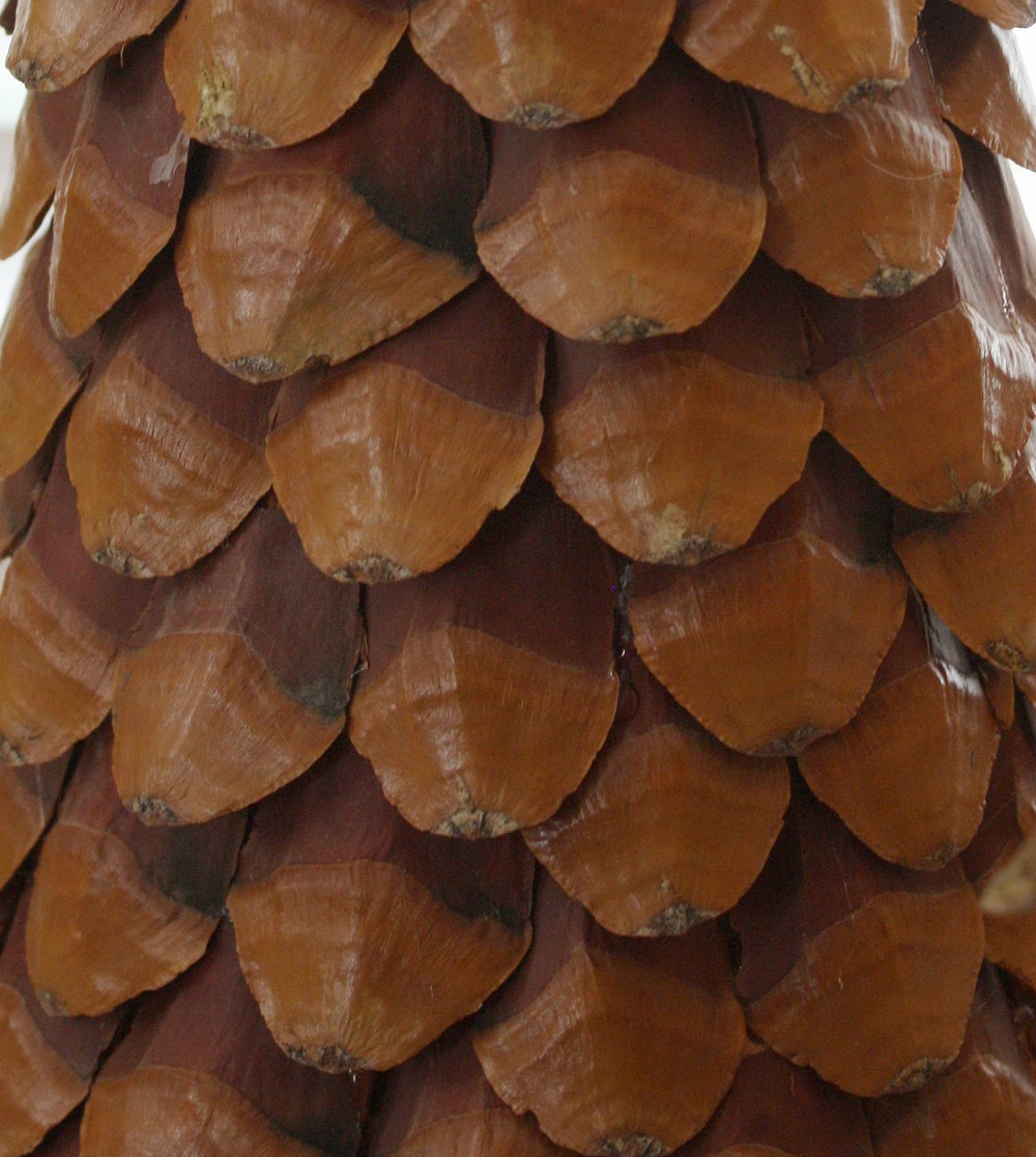 Close up of pinecones