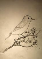 Bluebird Sketch