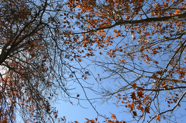 Looking skyward to the canopies of half-bare trees with brown leaves.
