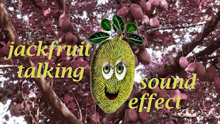 fruit network animation