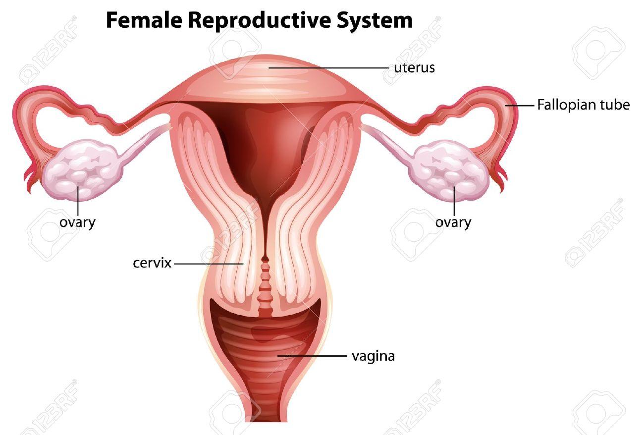 uterus sex tube