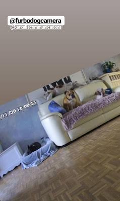 Garde chien en famille d'accueil Val d'oise