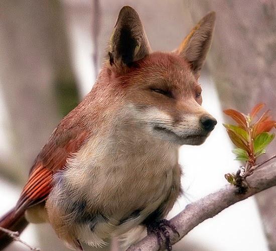 Animal Photo Manipulations All About Photo