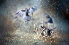jikalau tidak semua burung takut dengan hujan Jenis-Jenis Burung Peliharaan Yang Suka Hujan