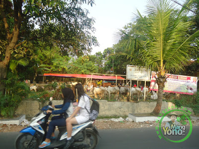 FOTO 2 : Jelang Idul Adha, Penjual Hewan Kurban Mulai Bermunculan