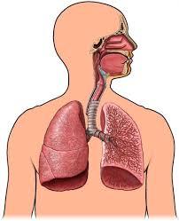 Pengobatan Untuk Sembuhkan Bronkopneumonia