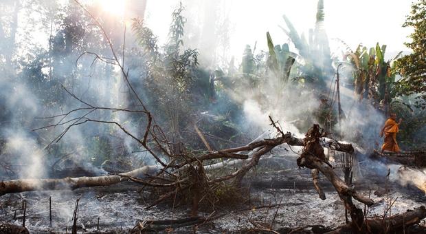 Cardamom+01+-+Monk+defending+forest+(Luke+Duggleby).jpg