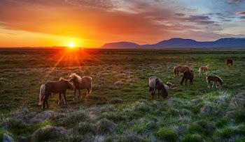 Güzel At Resimleri