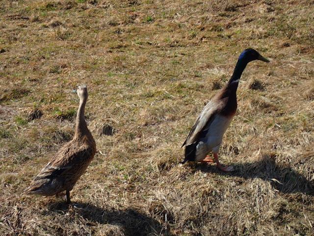 Nie wiadomo skąd, na przełęczy znalazły się wodne ptaki