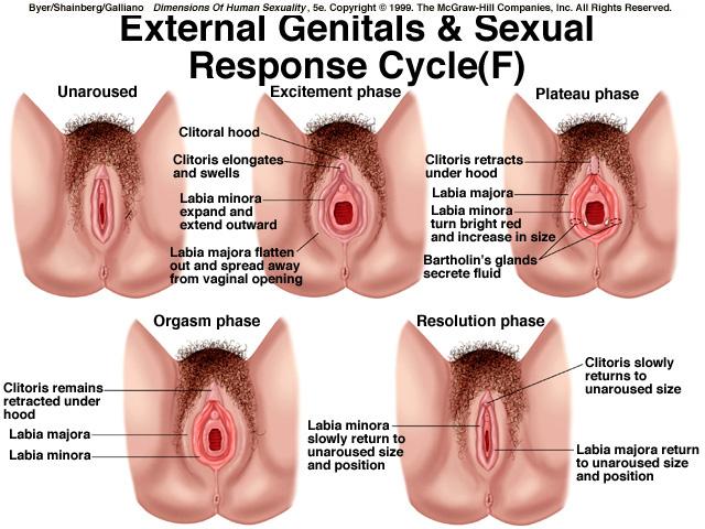femail sexual desire jpg 853x1280