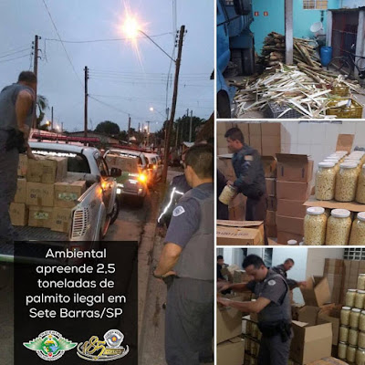 Policiais Ambientais localizaram e fecharam Fábrica clandestina de Palmitos em Sete Barras