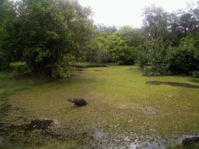 Kolam Rawa Gajah Taman Nasional Way Kambas