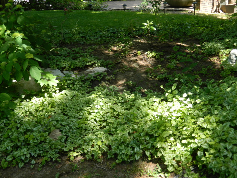 Garden Muses: Not Another Toronto Gardening Blog : A front