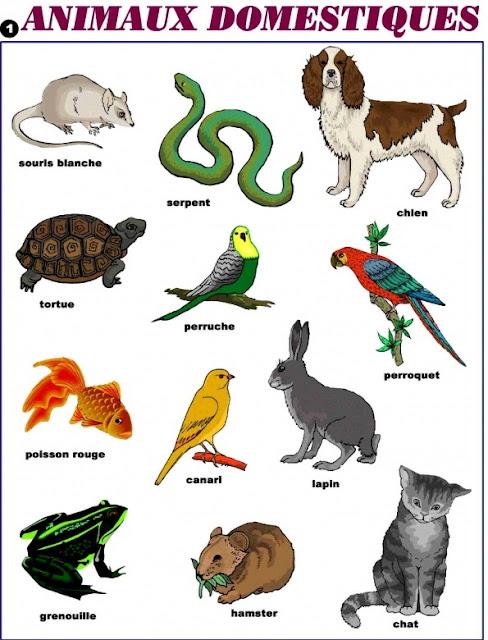 بحث حول أسماء الحيوانات بالفرنسية