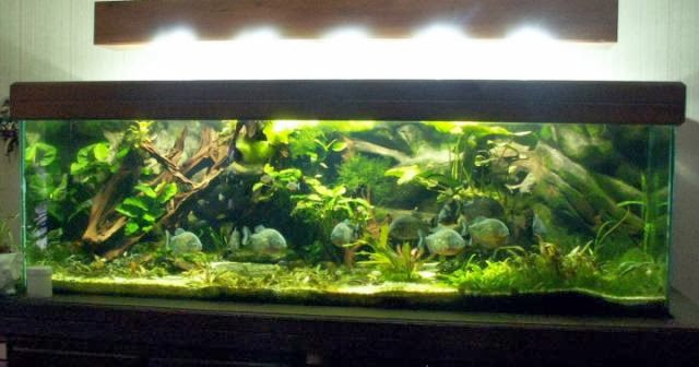 """Résultat de recherche d'images pour """"aquarium eclairé"""""""