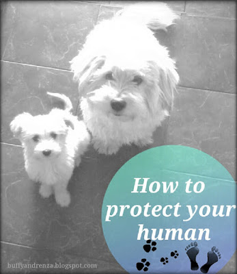 How to protect your human - tips for dogs